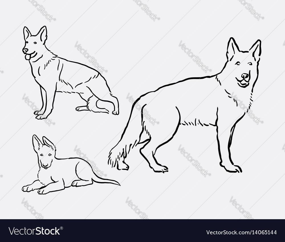 German Shepherd Dog Pet Animal Sketches Royalty Free Vector - German-shepherd-drawings