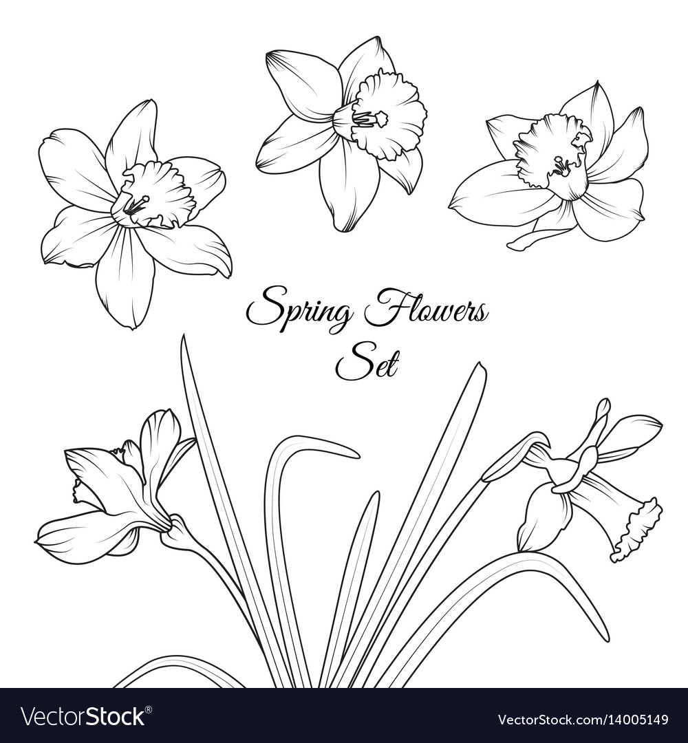 Narcissus spring flowers reusable elements set
