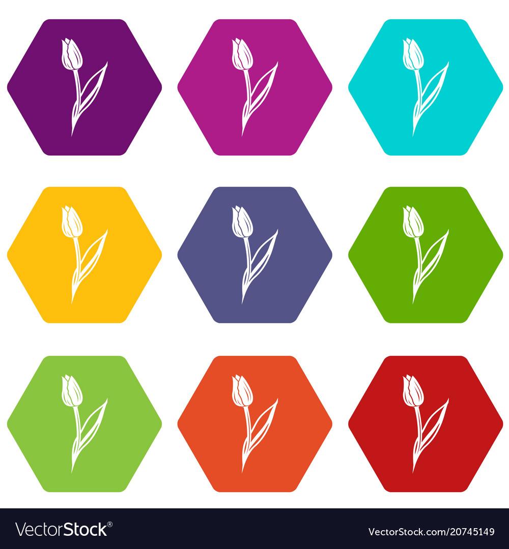 Tulip icons set 9