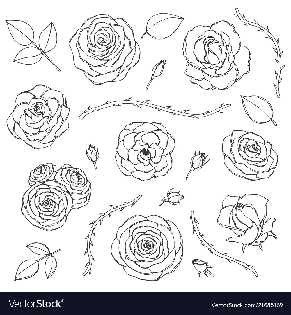 Hand drawn set rose flowers with buds leaves