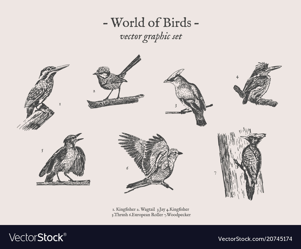 Small birds drawings set