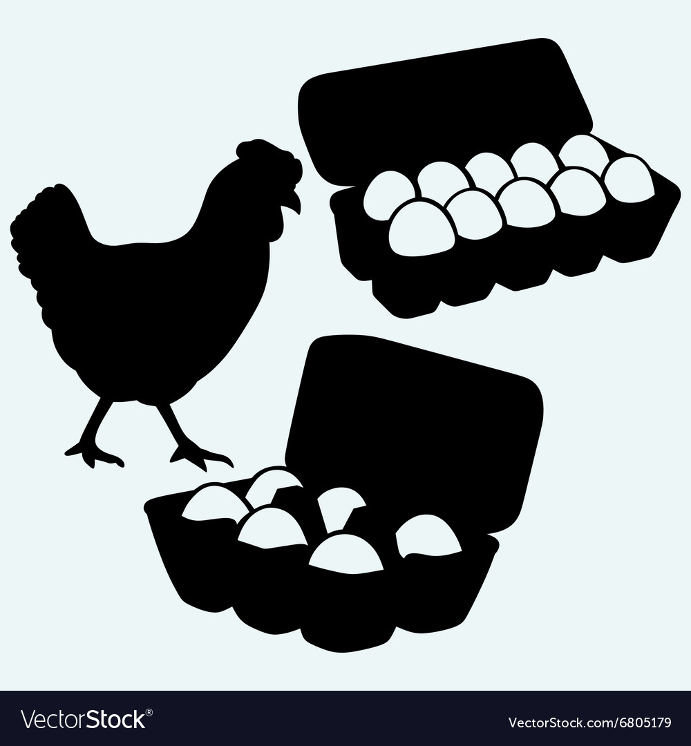 Eggs in a carton package and chicken