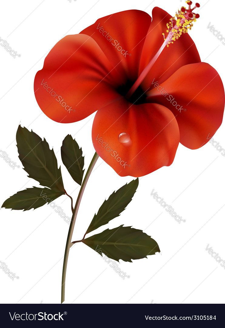 Beautiful red flower background with space for