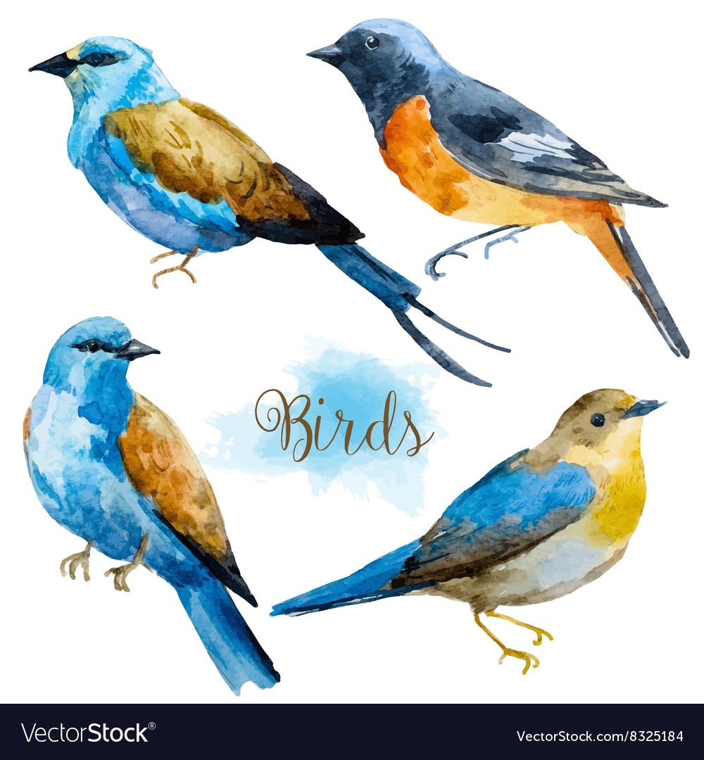 Watercolor hand drawn birds vector image
