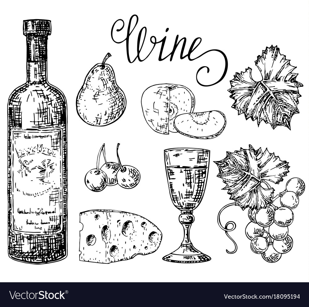 Ink hand drawn style white wine set vector image