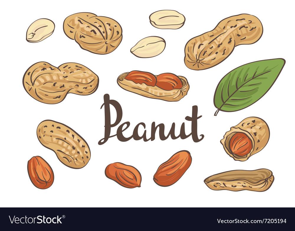 Peanuts kernels and leaves