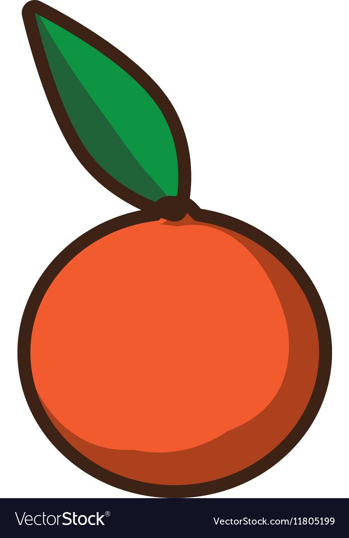 Fresh orange citrus fruit icon design vector image