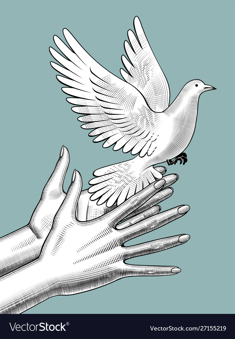 Female hands release a white dove vintage