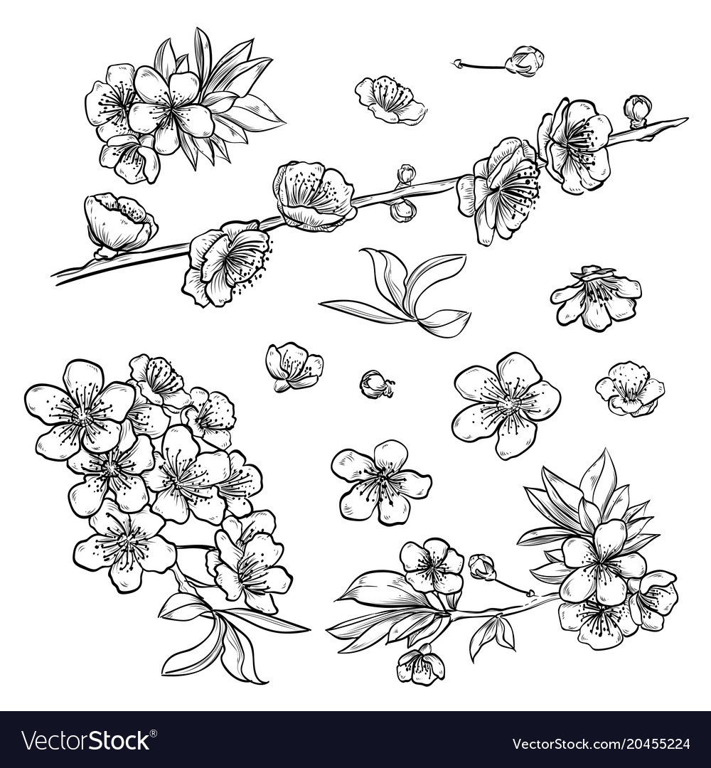 Hand drawn elegant sakura flowers vector image