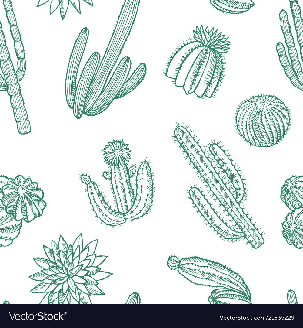 Hand drawn wild cacti plants pattern