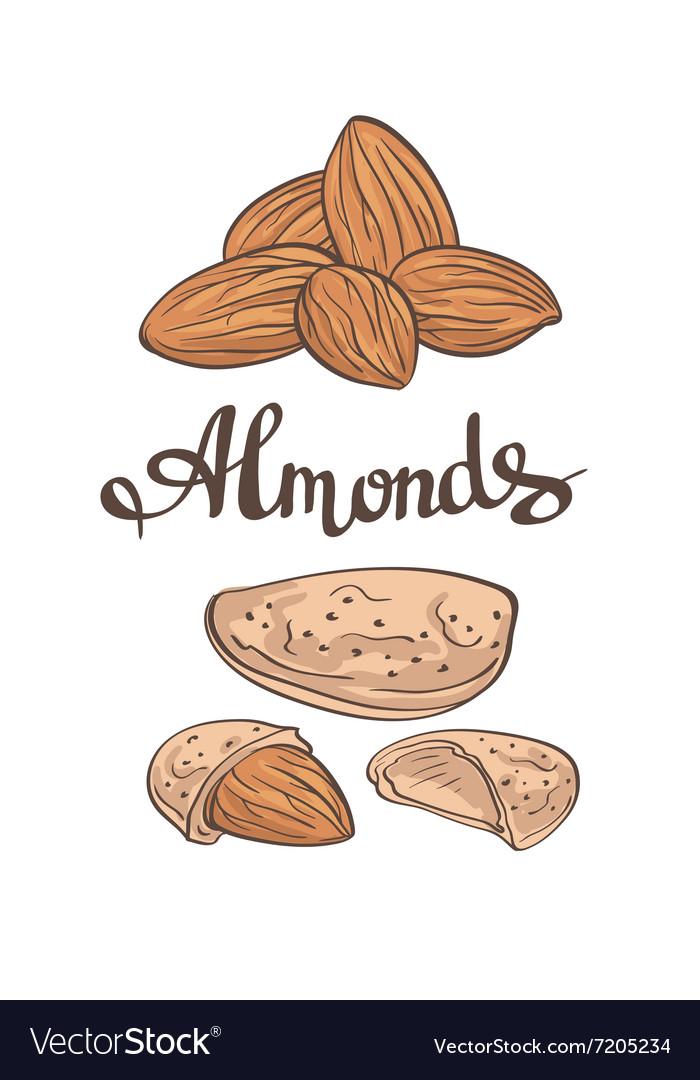 AlmondsHand drawn