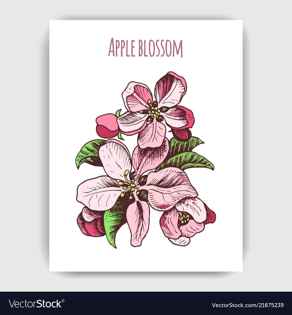 Hand drawn colorful postcard with apple blossom