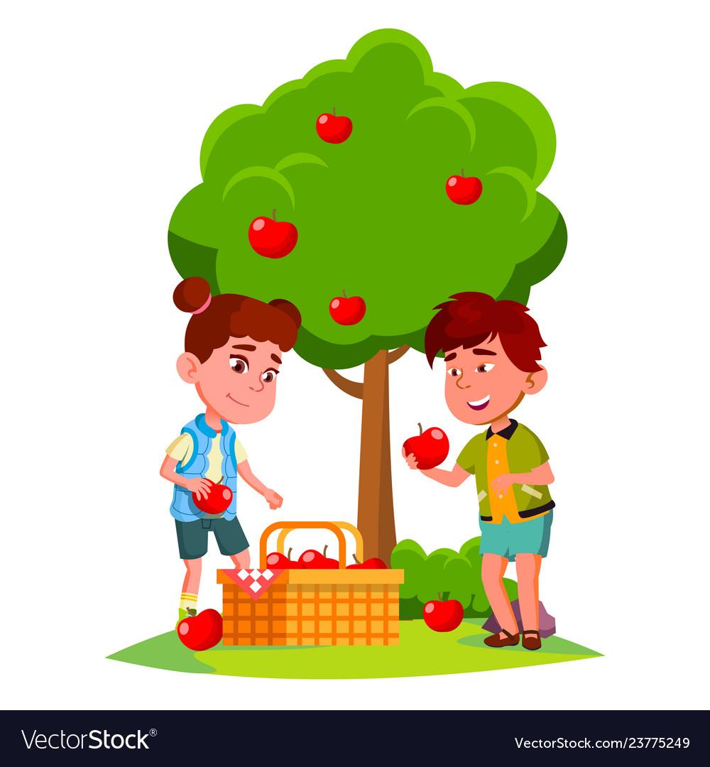 Kids harvest apples in basket near apple tree