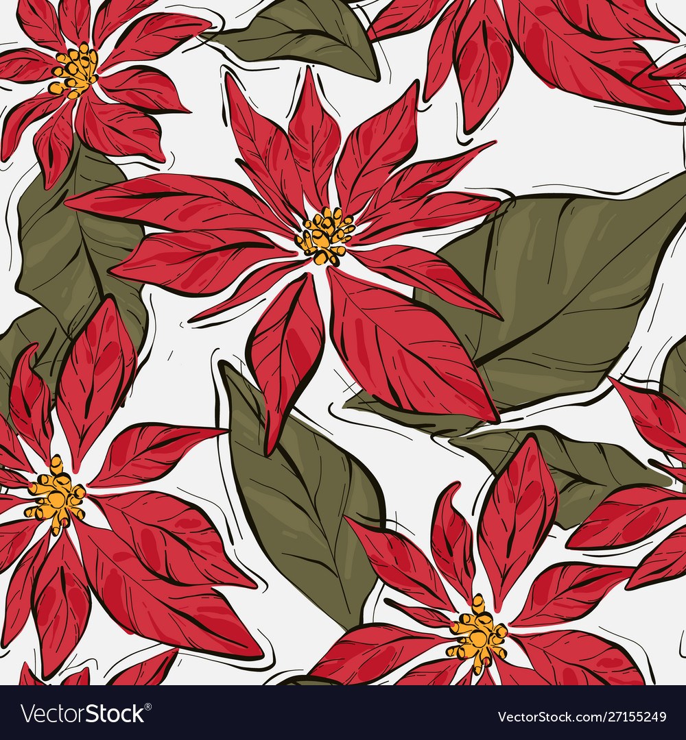 Poinsettia winter flower with green leaves xmas