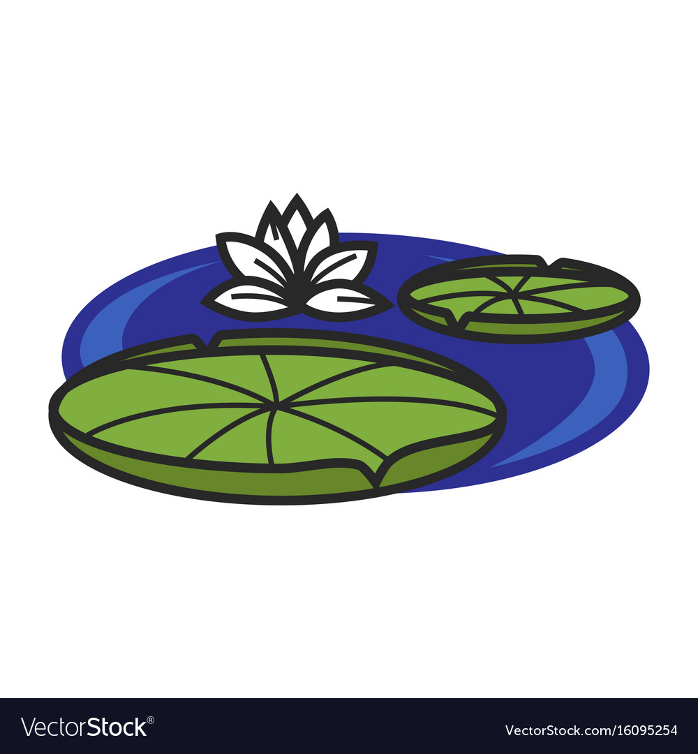 Pond with water lily vector image