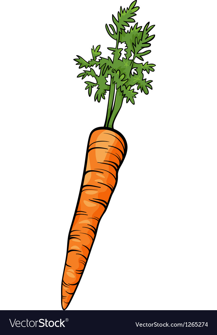 carrot root vegetable cartoon royalty free vector image