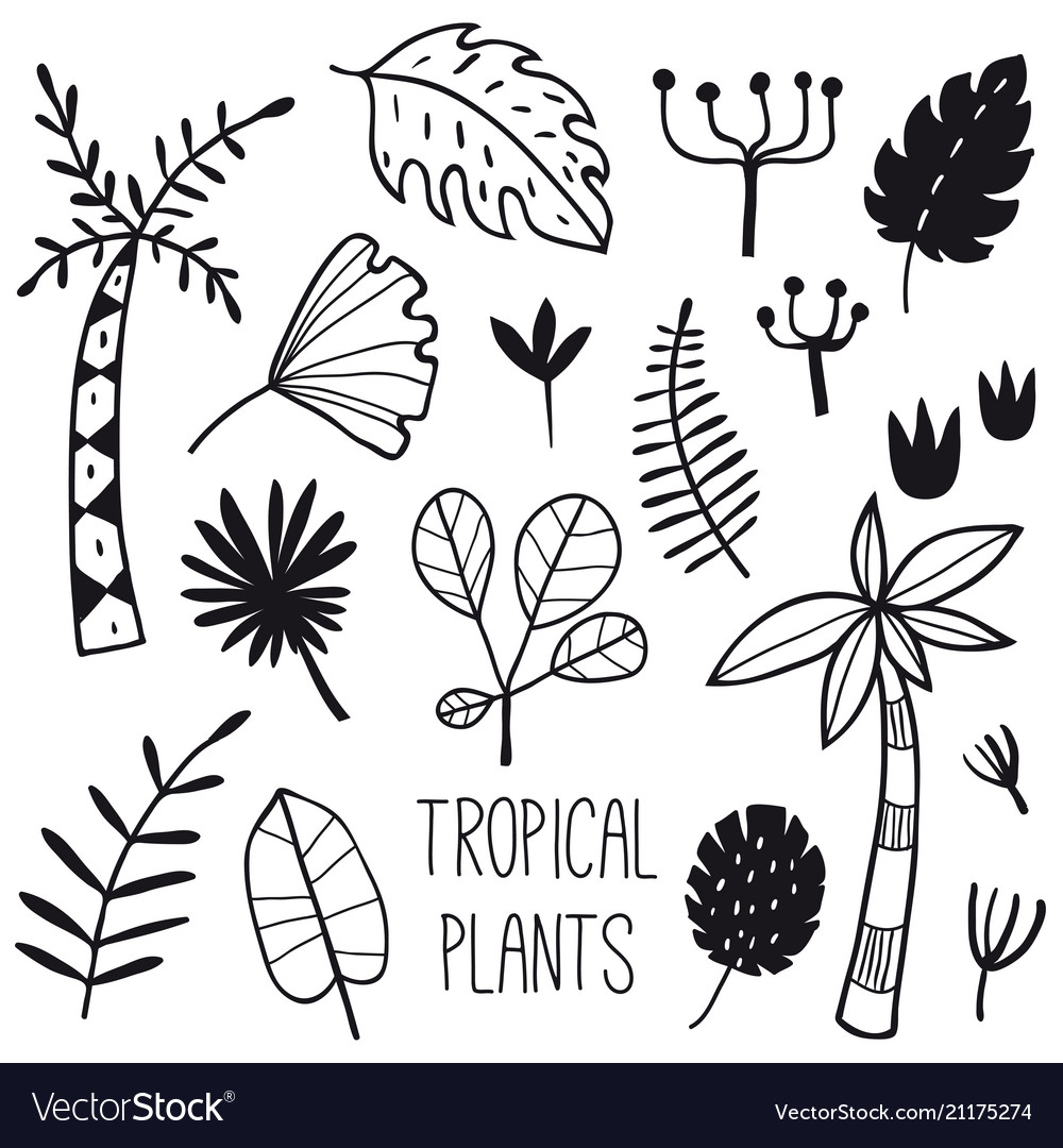 Tropical plants and leaves set