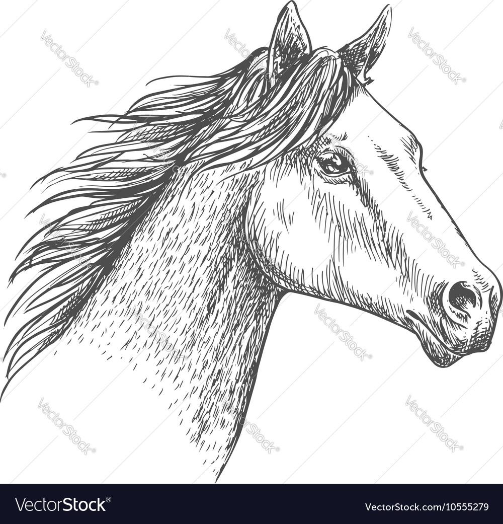 Horse head pencil sketch strokes portrait vector image