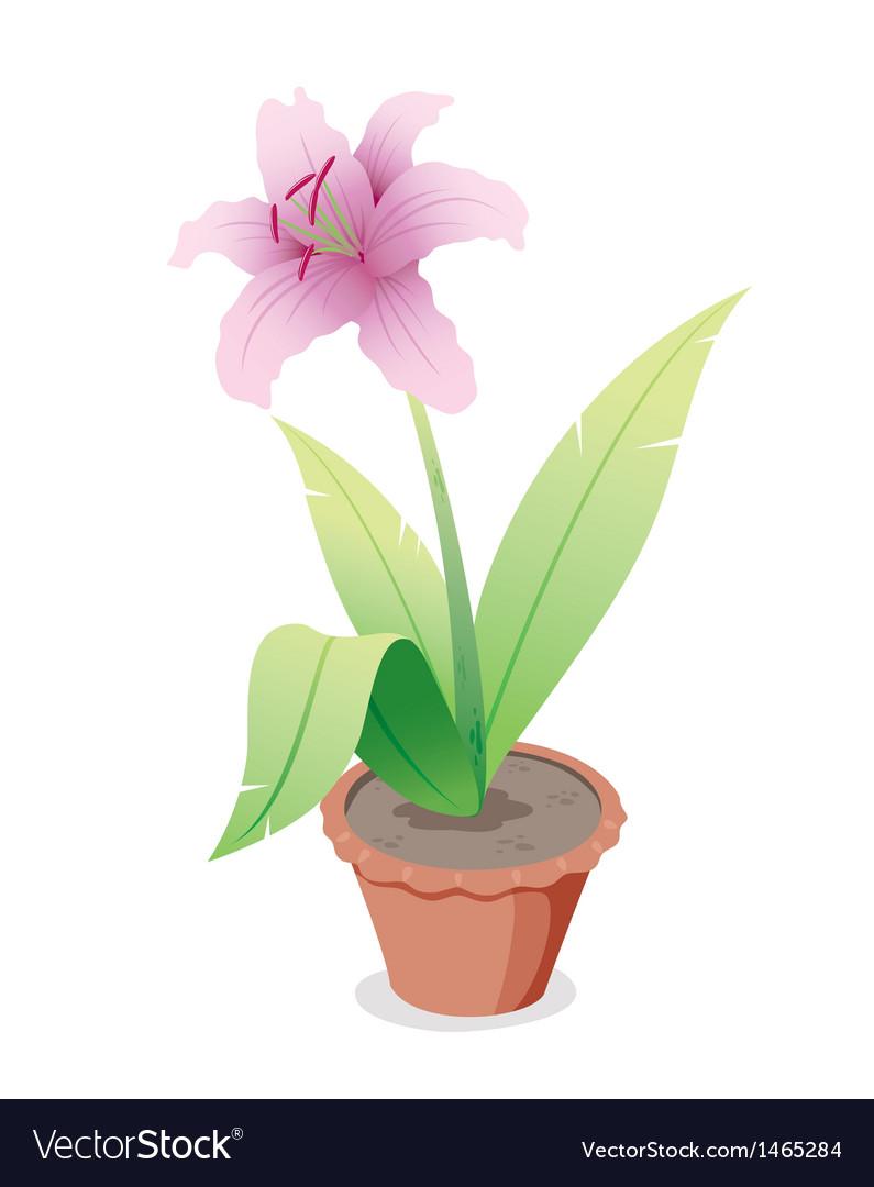 Pink flower in pot