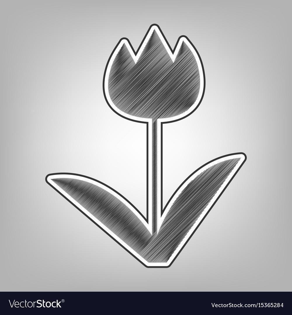 tulip sign pencil sketch imitation dark royalty free vector