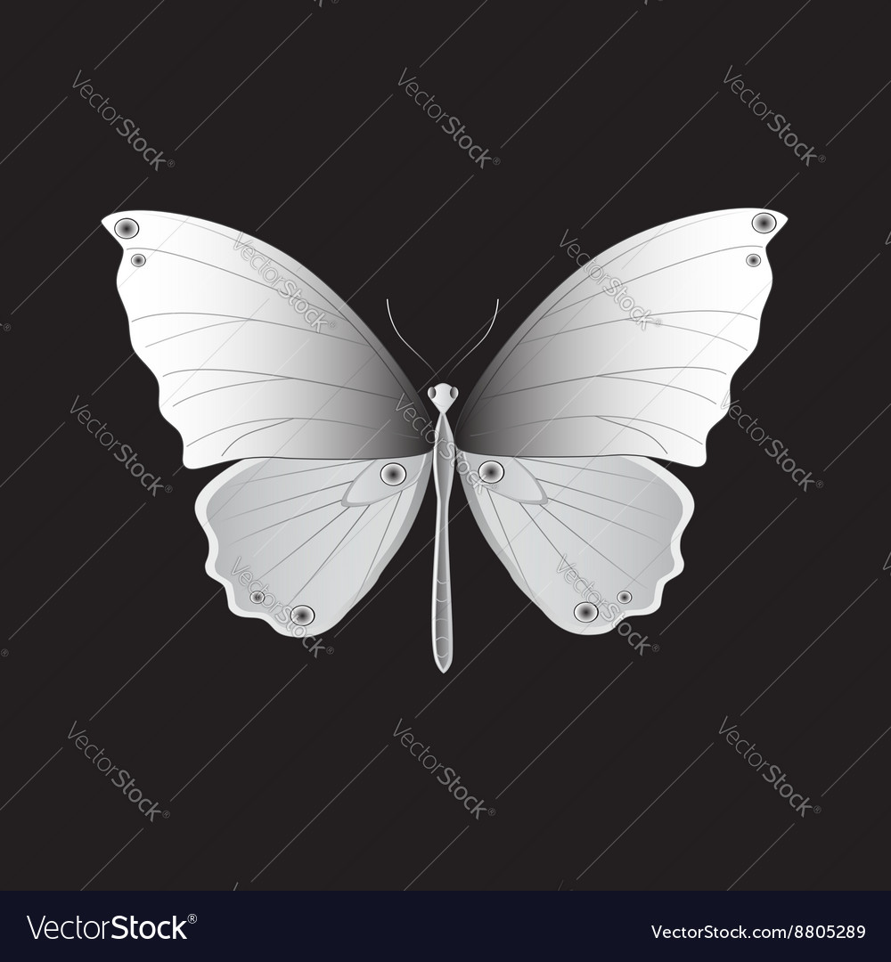 Iron butterfly vector image