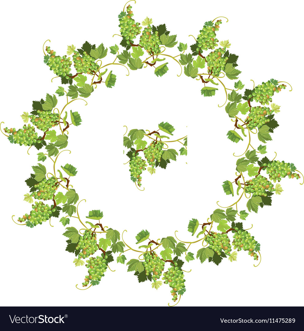 Round Grapes frame and repeated element for wine vector image