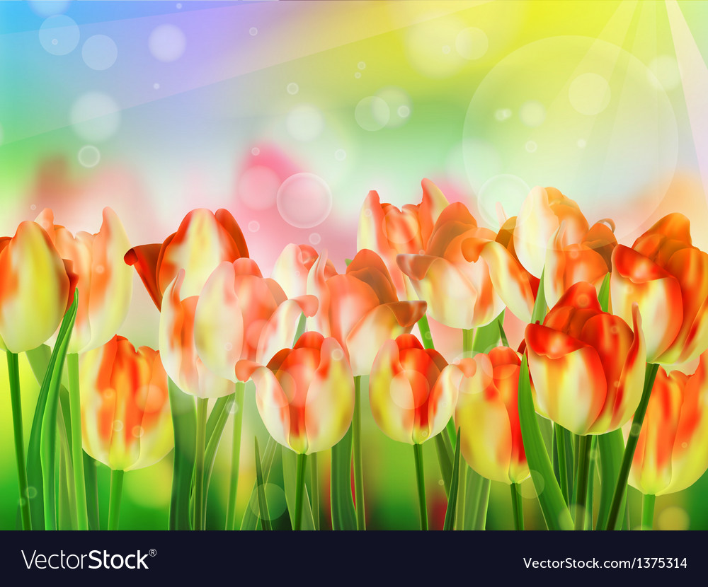 red tulip bokeh template eps 10 royalty free vector image