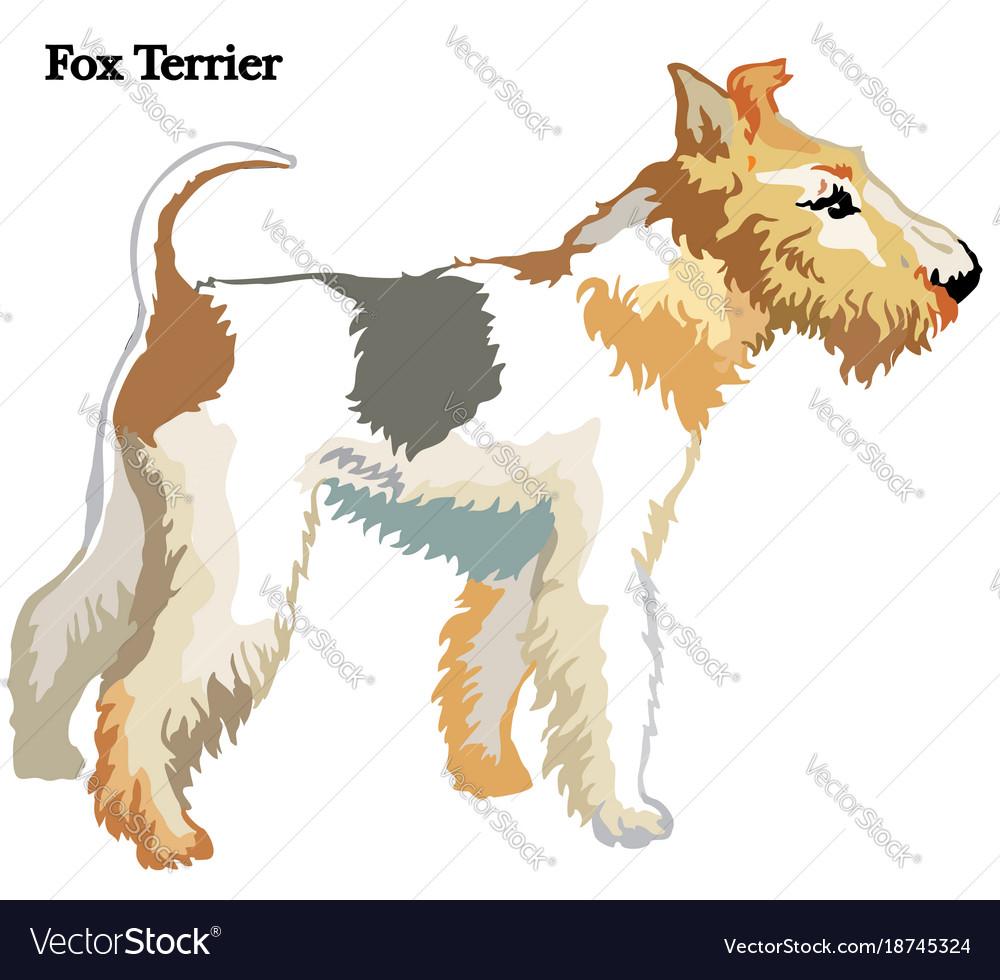 Fox terrier Royalty Free Vector Image - VectorStock