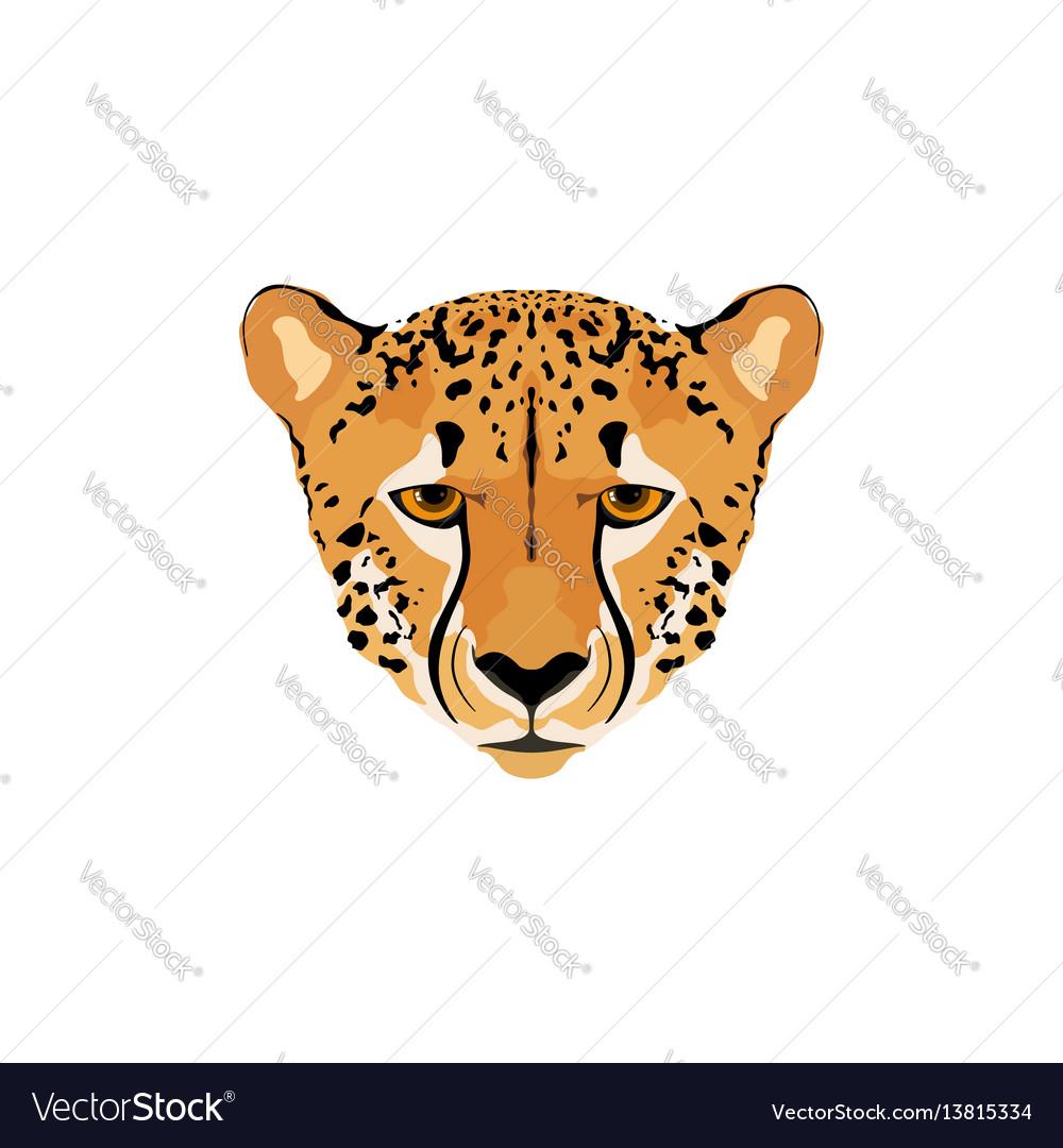 A cheetah head vector image