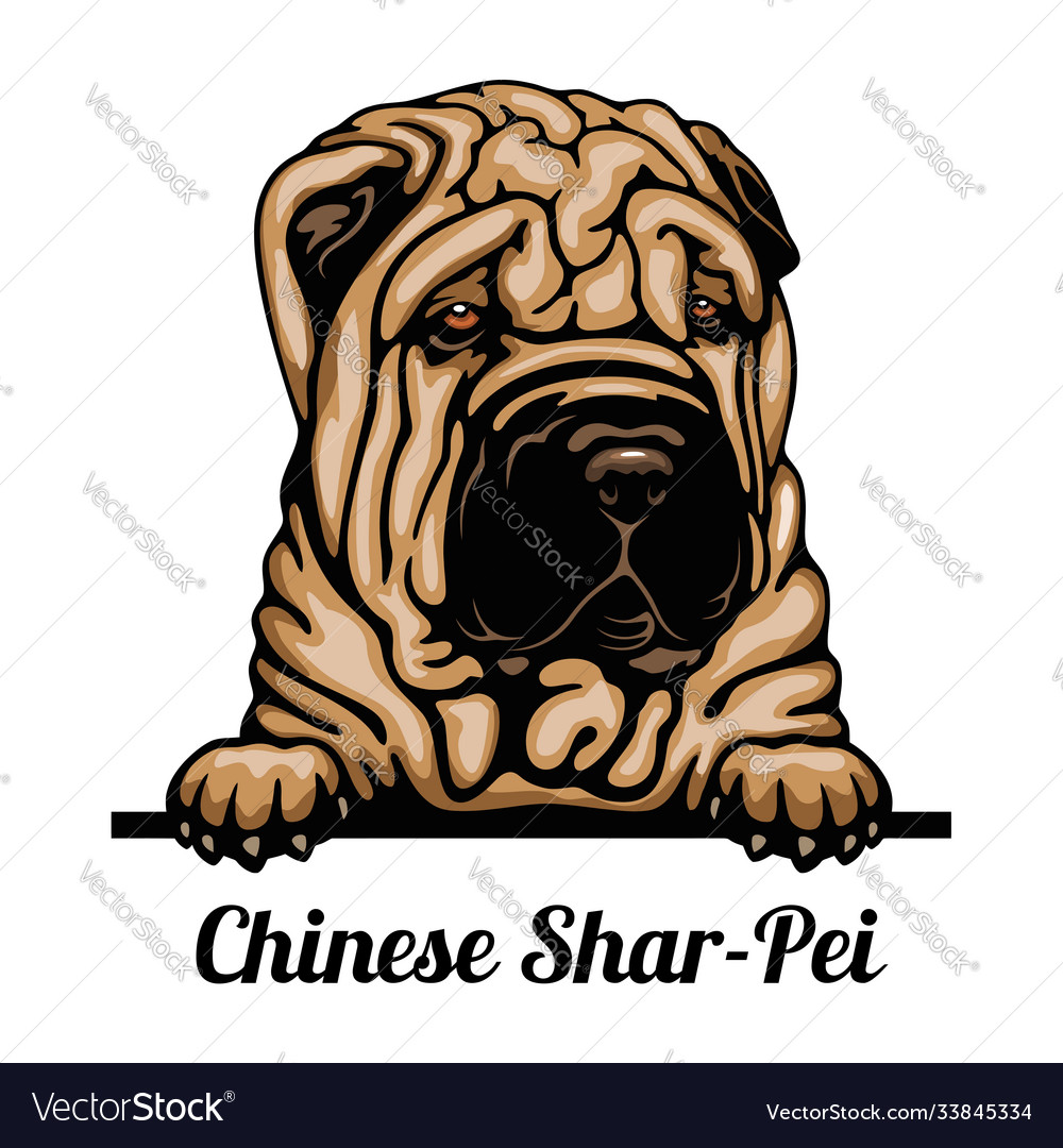 Head - dog breed color image