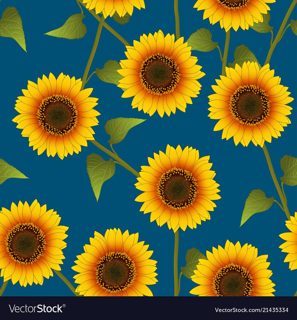 Orange yellow sunflower on indigo blue background