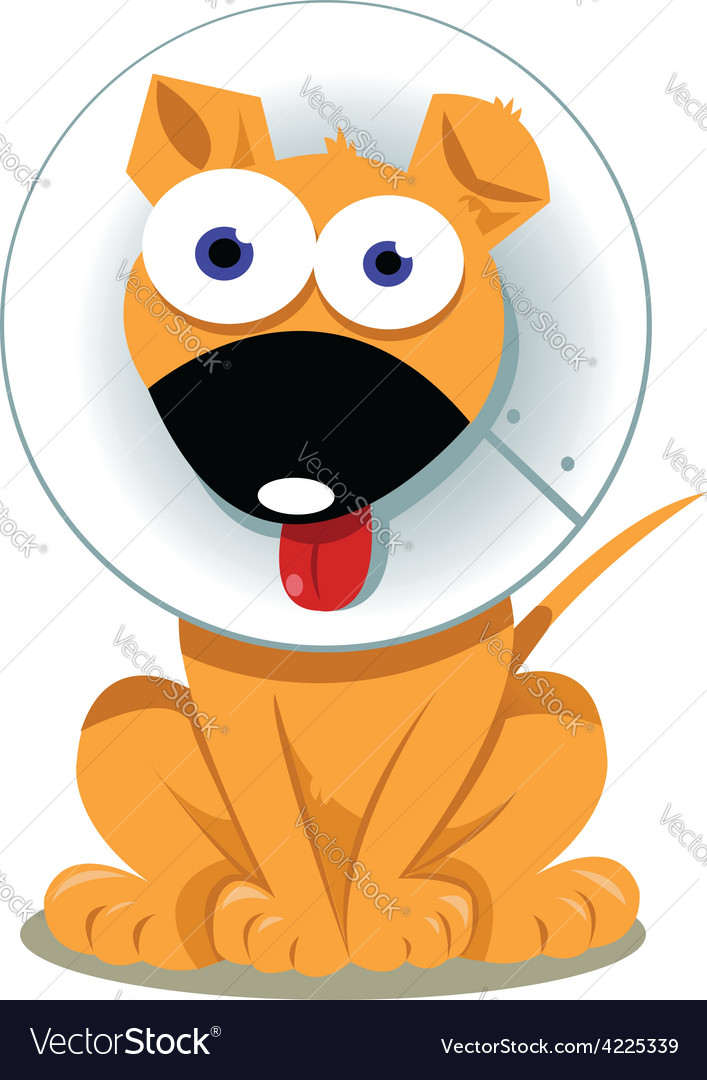 Funny Dog with Elizabethan Collar vector image