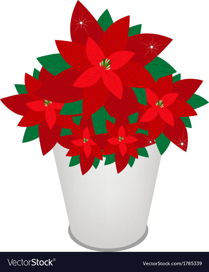 Red Christmas Poinsettia Flower In A Flower Pot Vector Image