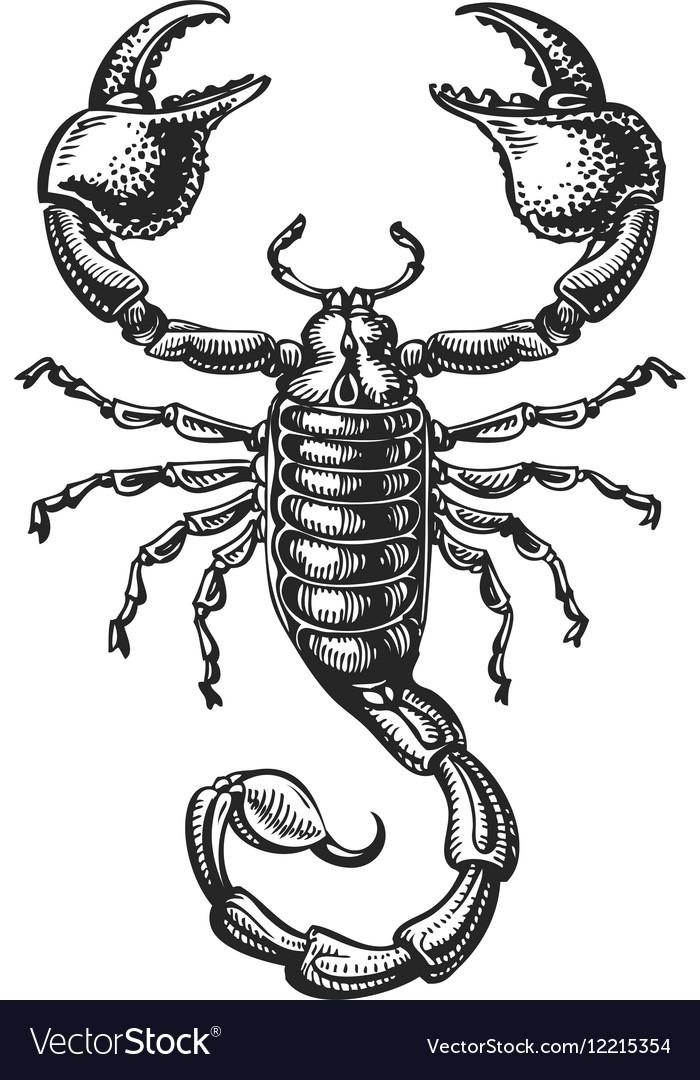 Hand drawn sketch of scorpion Tattoo animal vector image