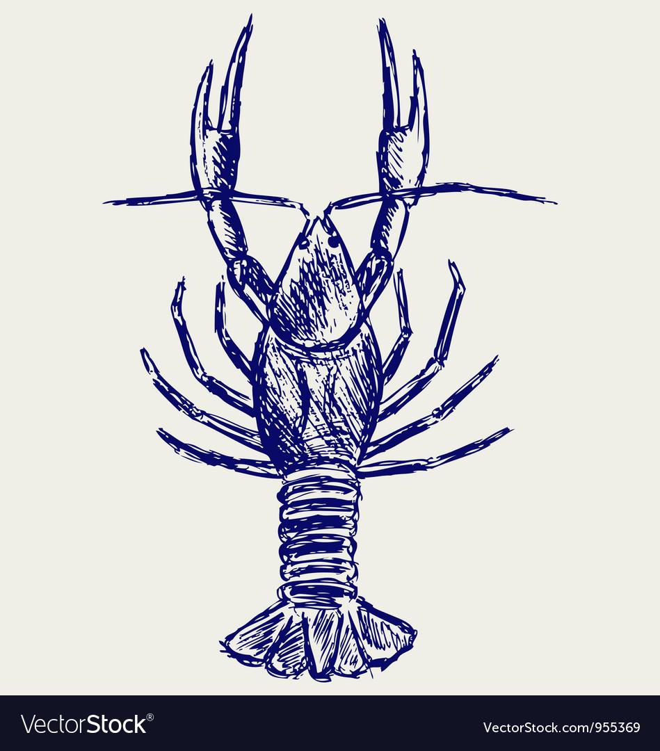 Crayfish sketch vector image
