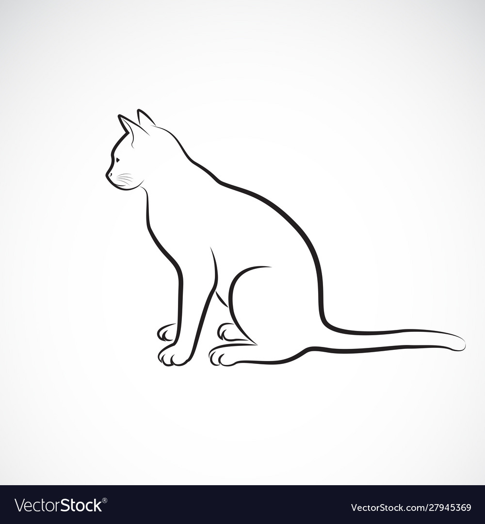 Sitting cat on a white background pet animals