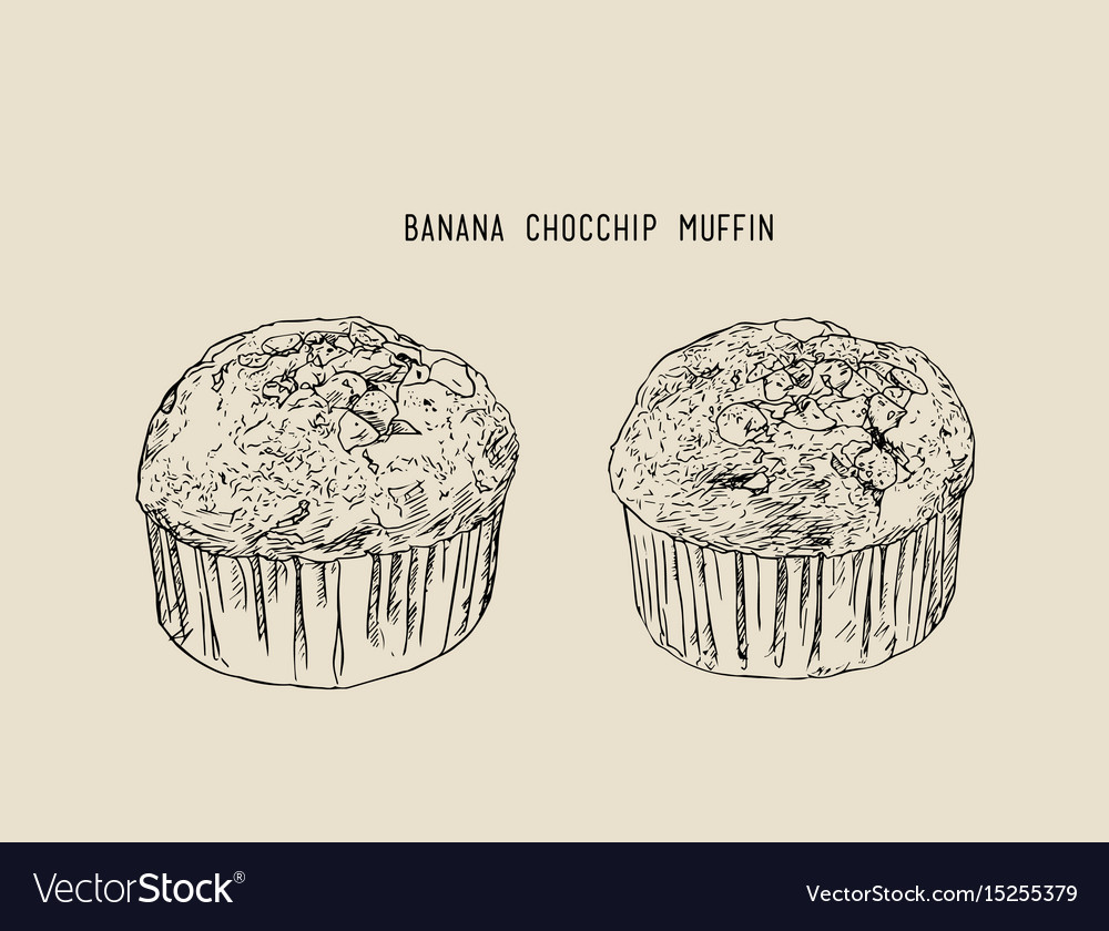 Banana chocolate chip muffins in paper cases vector image