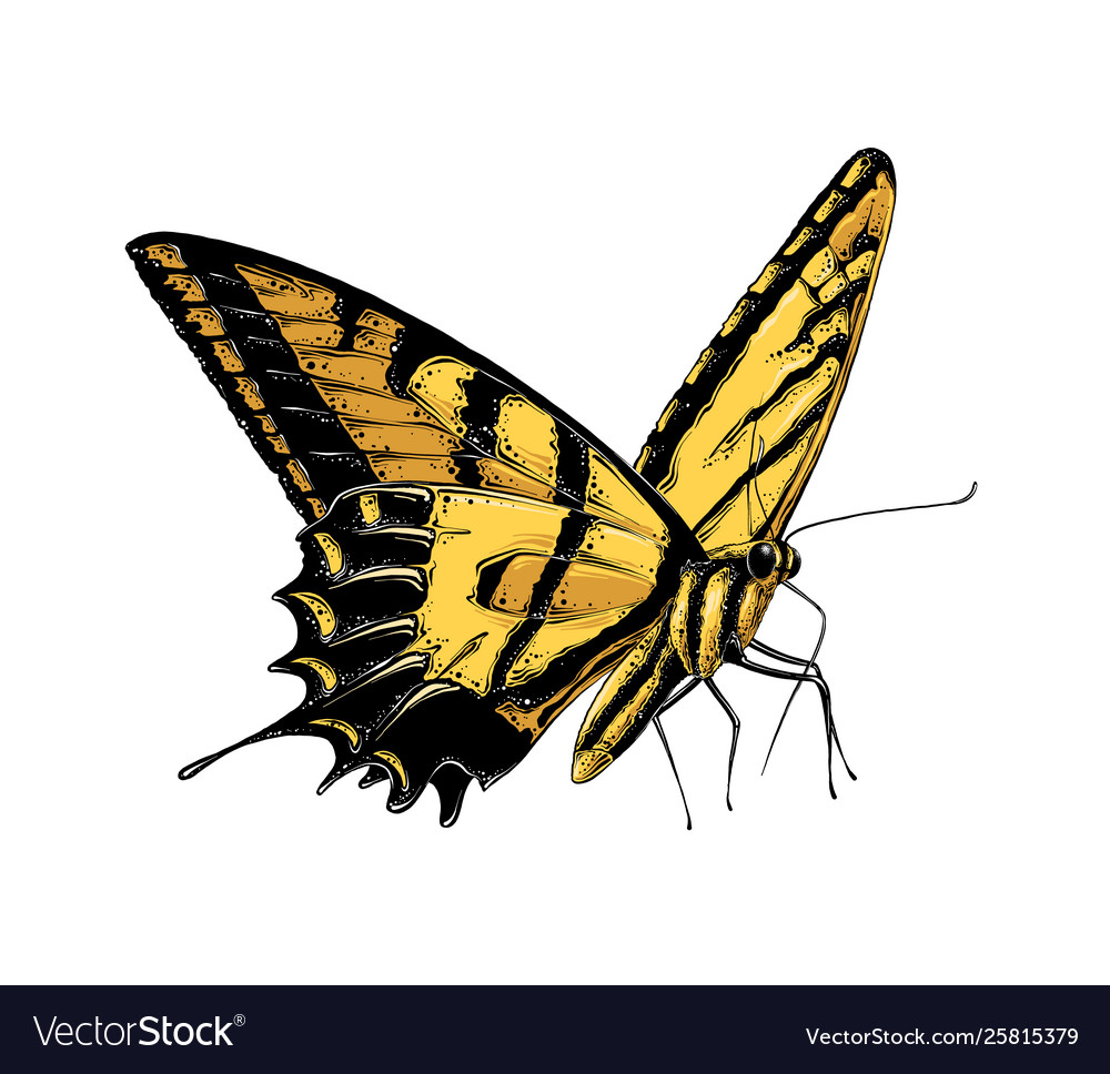 Hand drawn sketch butterfly in yellow color