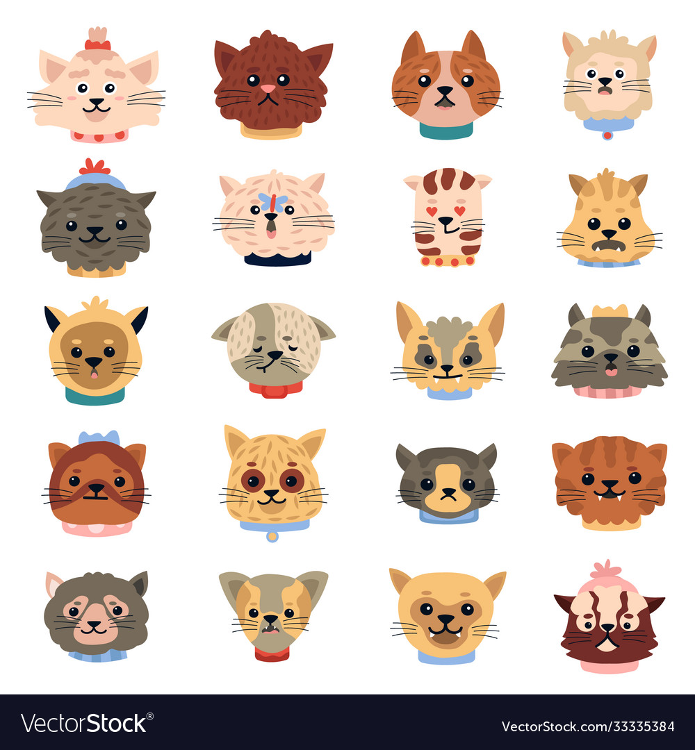 Cats emotions cute funny kitten faces pets