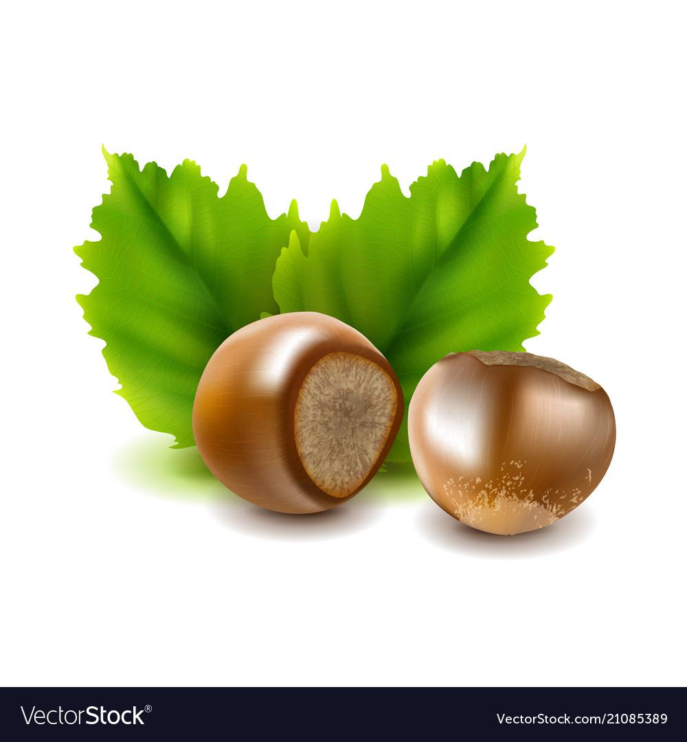 Photo-realistic hazelnuts