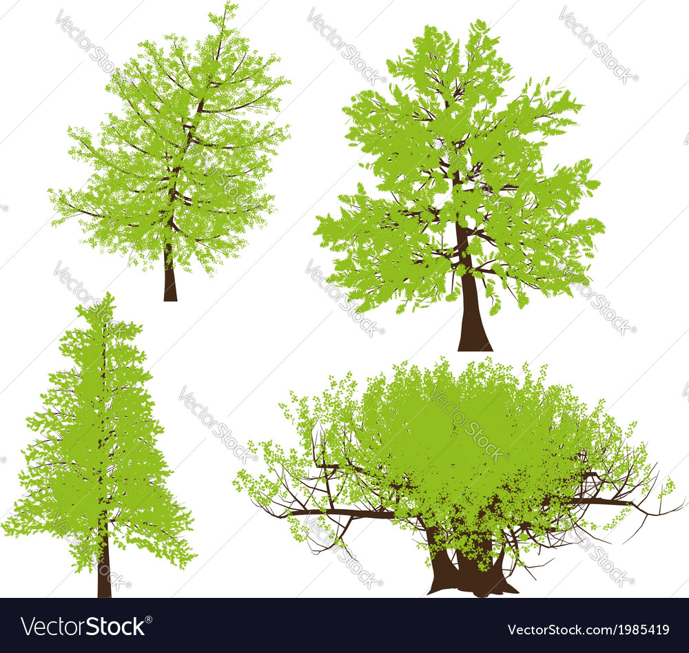 Drawing of the tree llustration