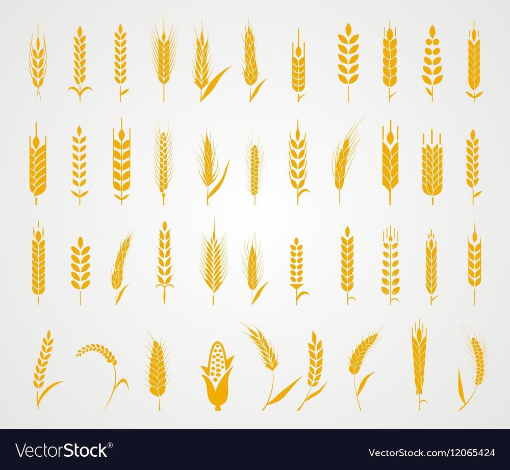 Ears of wheat bread symbols