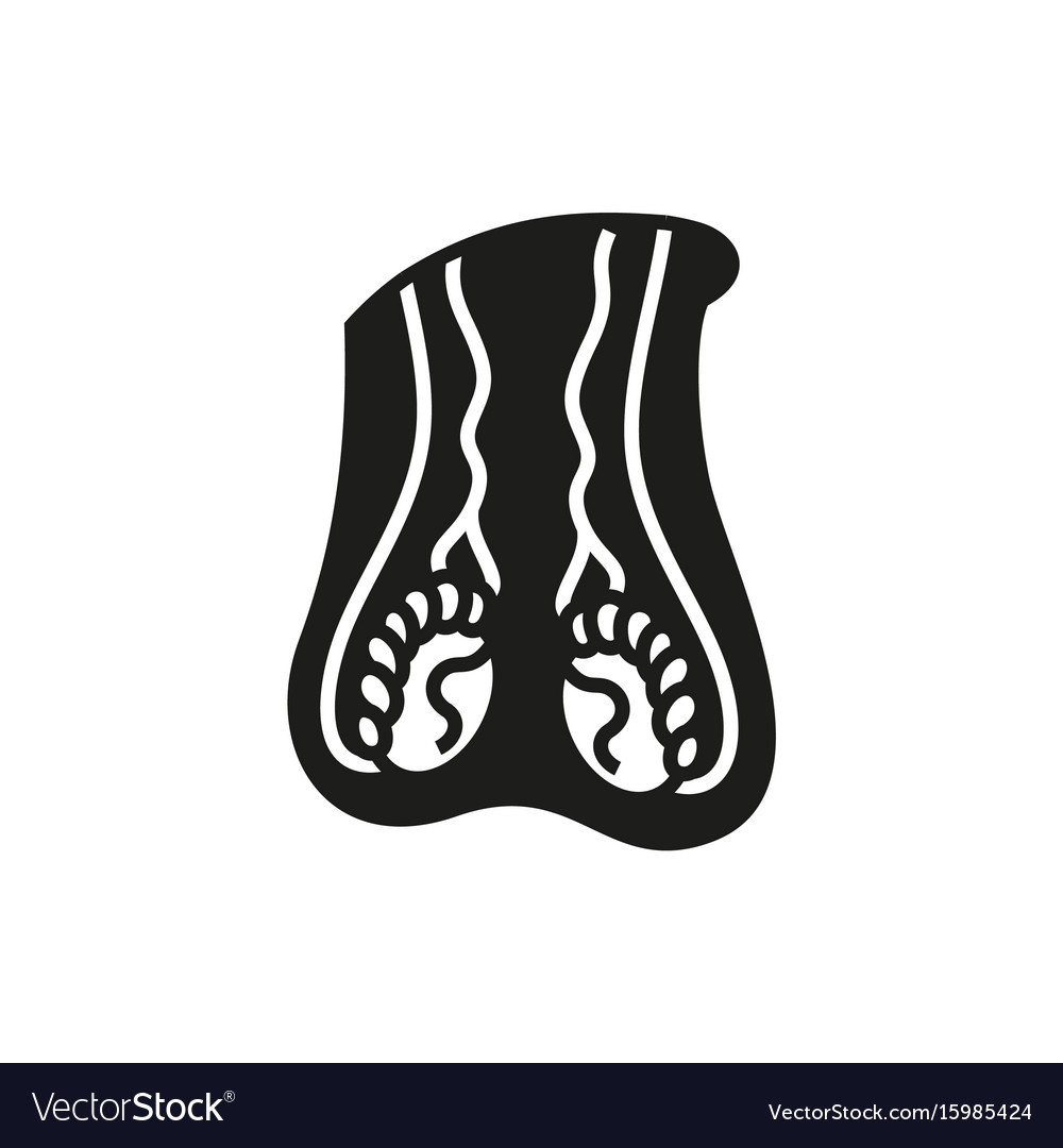 Male reproductive system icon vector image