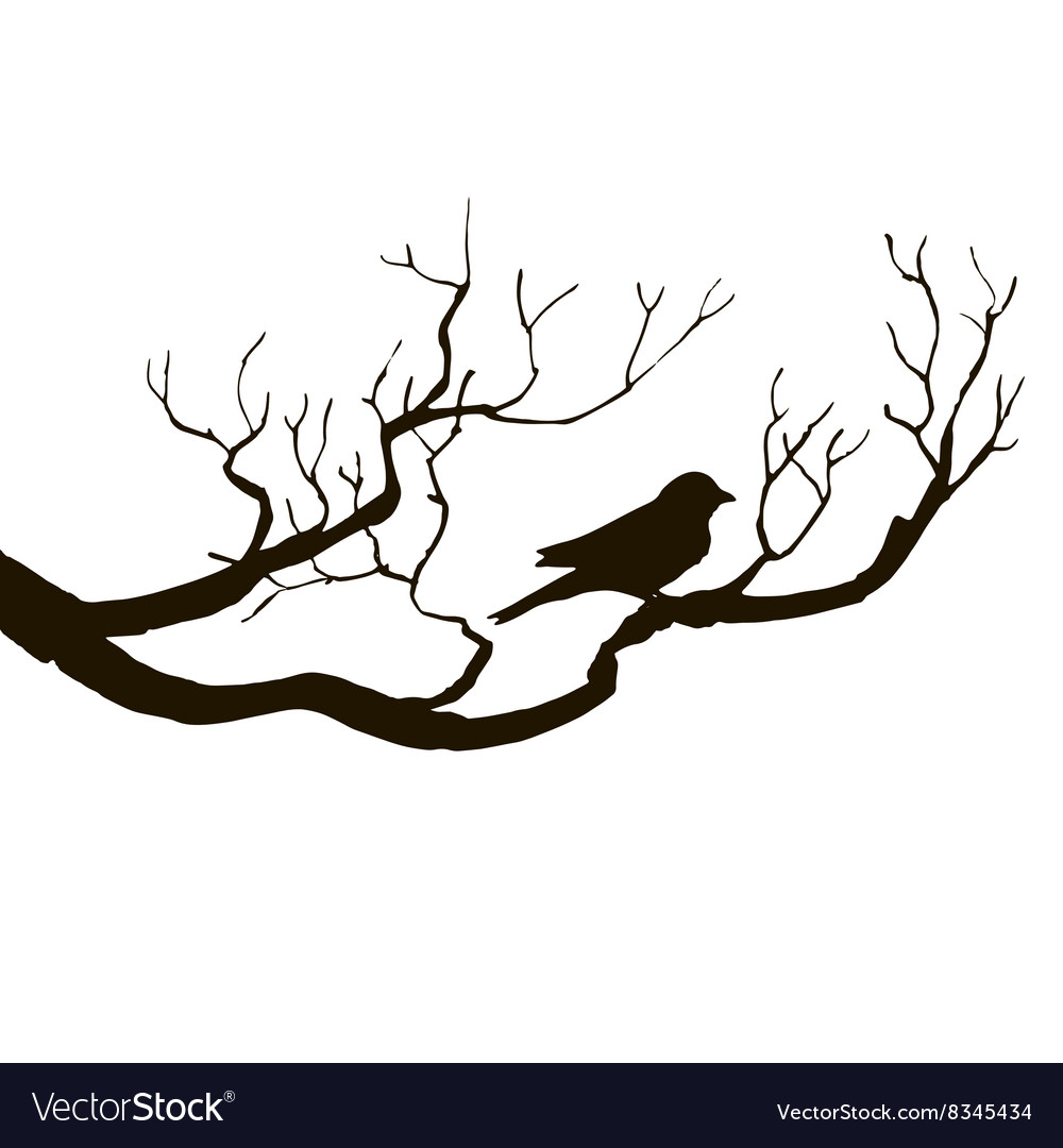 Bird at tree silhouettes