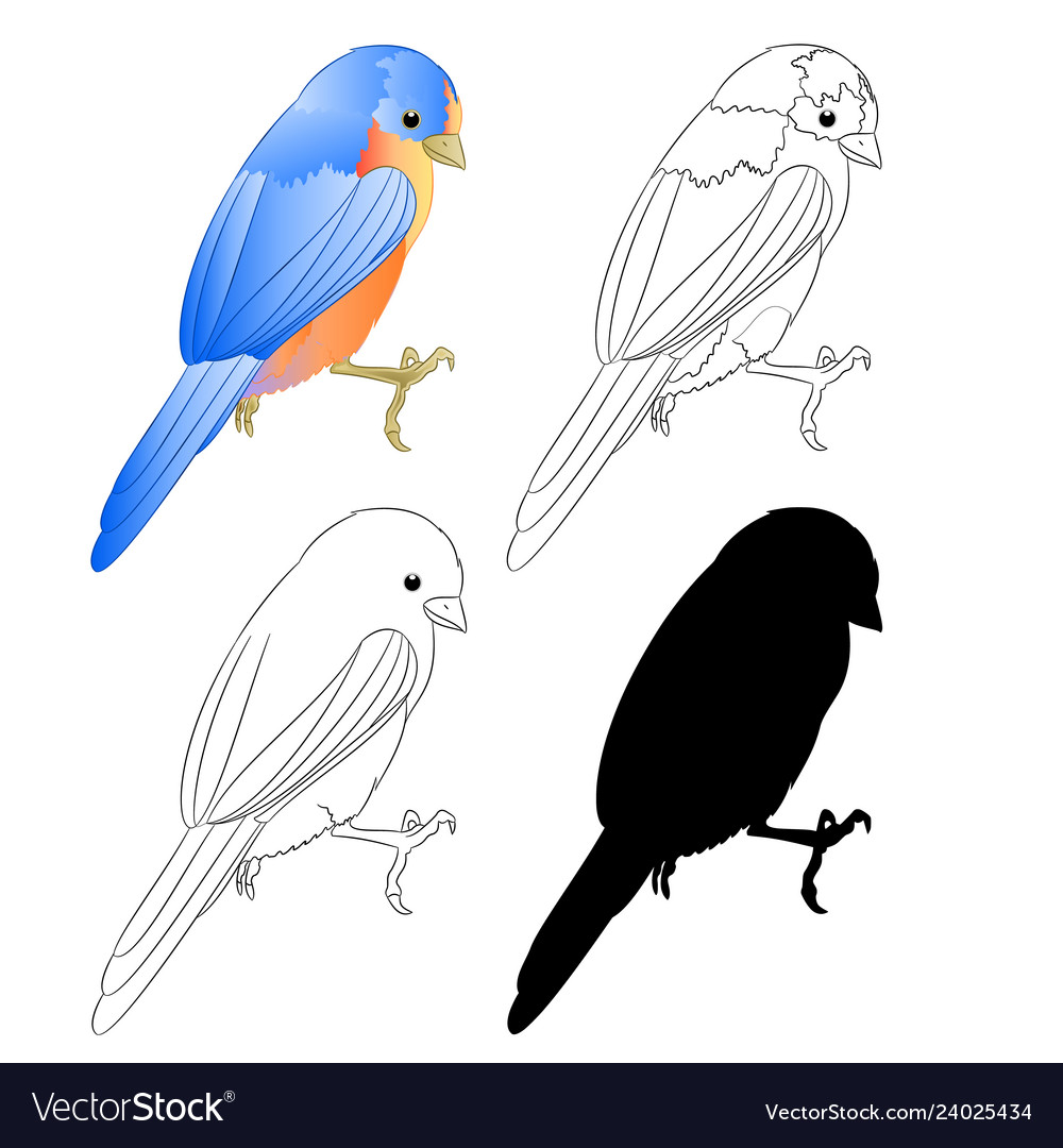 Small Bird Thrush Bluebird Silhouette And Outline