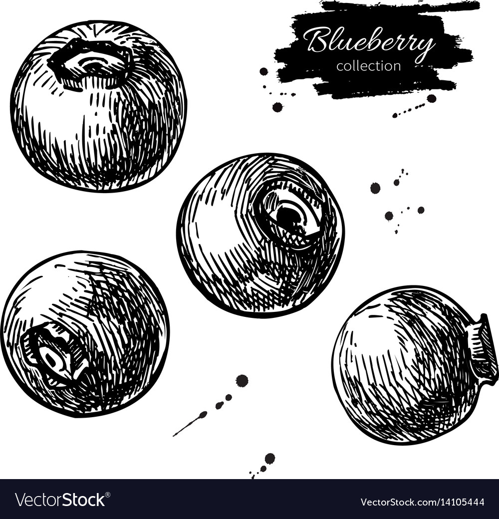 Blueberry drawing set isolated hand drawn