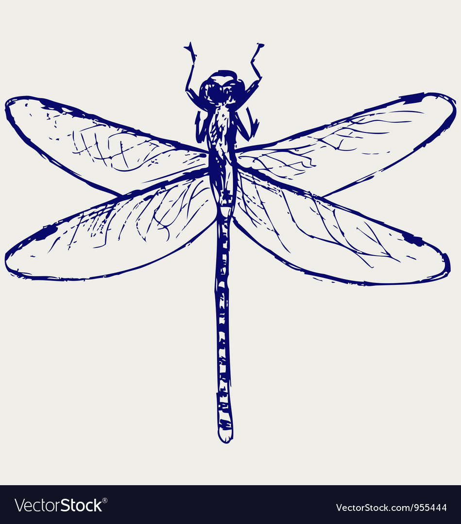 dragonfly royalty free vector image vectorstock rh vectorstock com dragonfly vector free dragonfly vector art free