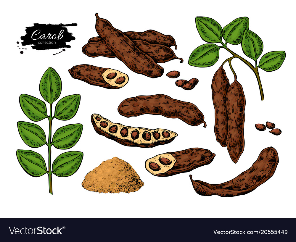 Carob superfood drawing set isolated hand vector image