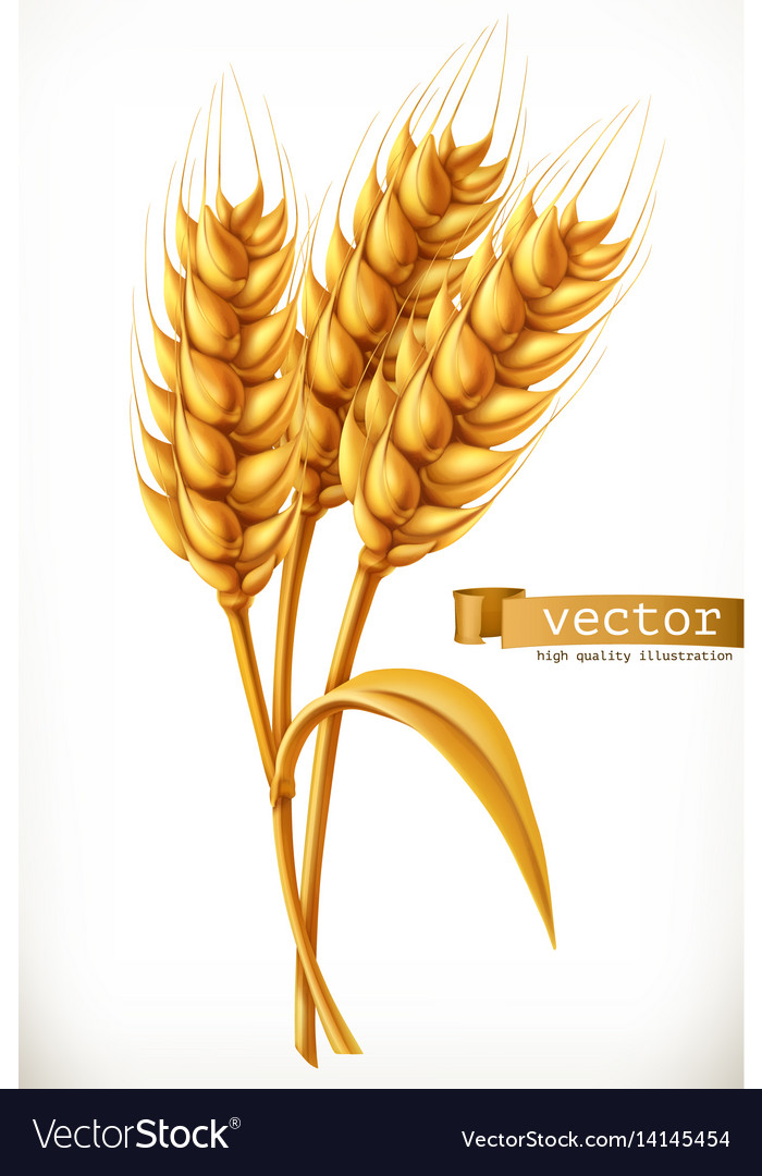 Ear of wheat 3d icon vector image