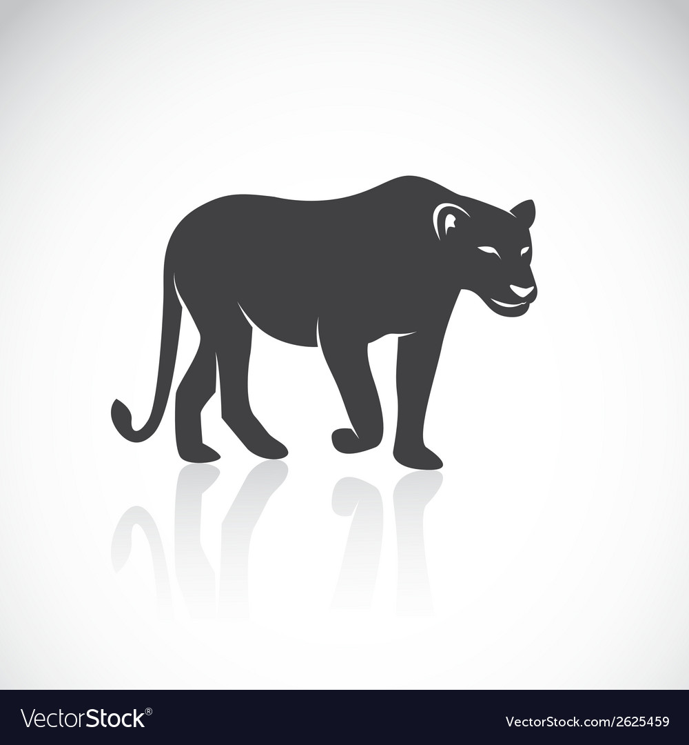 Image of an female lion